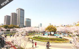 桜見学・お花見されるお客様へブルーシート無料貸出致します。